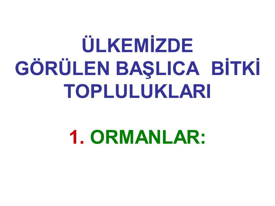 28.06.2006 Yazılı Basın Haberi: Türkiye'nin bilinen en yaşlı ağacı Antalya da: Antalya'da bulunan 25 metre boyunda, 262 santimetre çapındaki Sedir Ağacının, Türkiye'deki bilinen en yaşlı ağaç olduğu bildirildi.