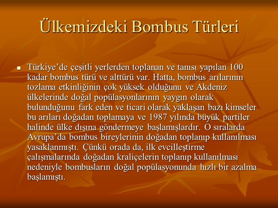 Ülkemizdeki Bombus Türleri Türkiye'de çeşitli yerlerden toplanan ve tanısı yapılan 100 kadar bombus türü ve alttürü var. Hatta, bombus arılarının tozl