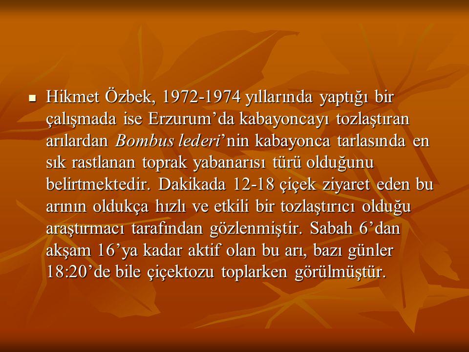 Hikmet Özbek, 1972-1974 yıllarında yaptığı bir çalışmada ise Erzurum'da kabayoncayı tozlaştıran arılardan Bombus lederi'nin kabayonca tarlasında en sı