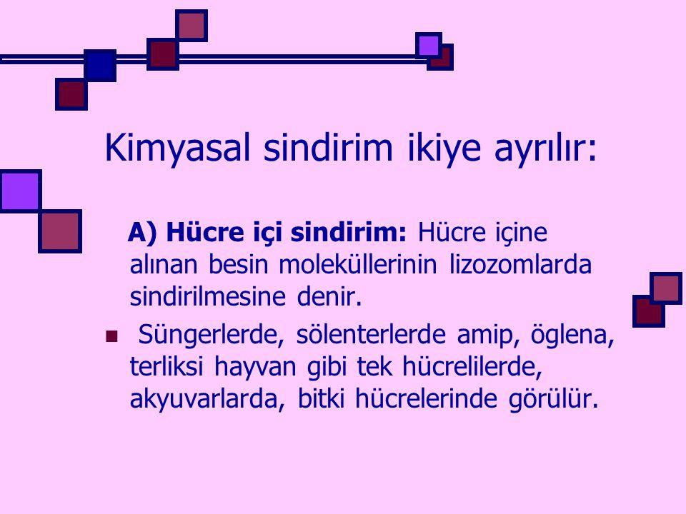 Kimyasal sindirim ikiye ayrılır: A) Hücre içi sindirim: Hücre içine alınan besin moleküllerinin lizozomlarda sindirilmesine denir. Süngerlerde, sölent