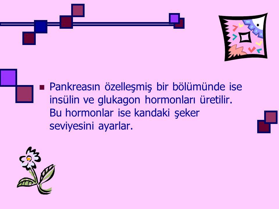 Pankreasın özelleşmiş bir bölümünde ise insülin ve glukagon hormonları üretilir. Bu hormonlar ise kandaki şeker seviyesini ayarlar.