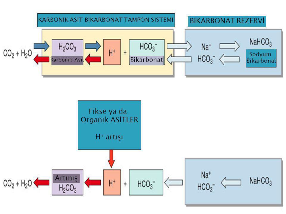 Figure 27.9a, b KARBONİK ASİT BİKARBONAT TAMPON SİSTEMİ BİKARBONAT REZERVİ Fikse ya da Organik ASİTLER H + artışı Artmış Karbonik Asit Bikarbonat Sody