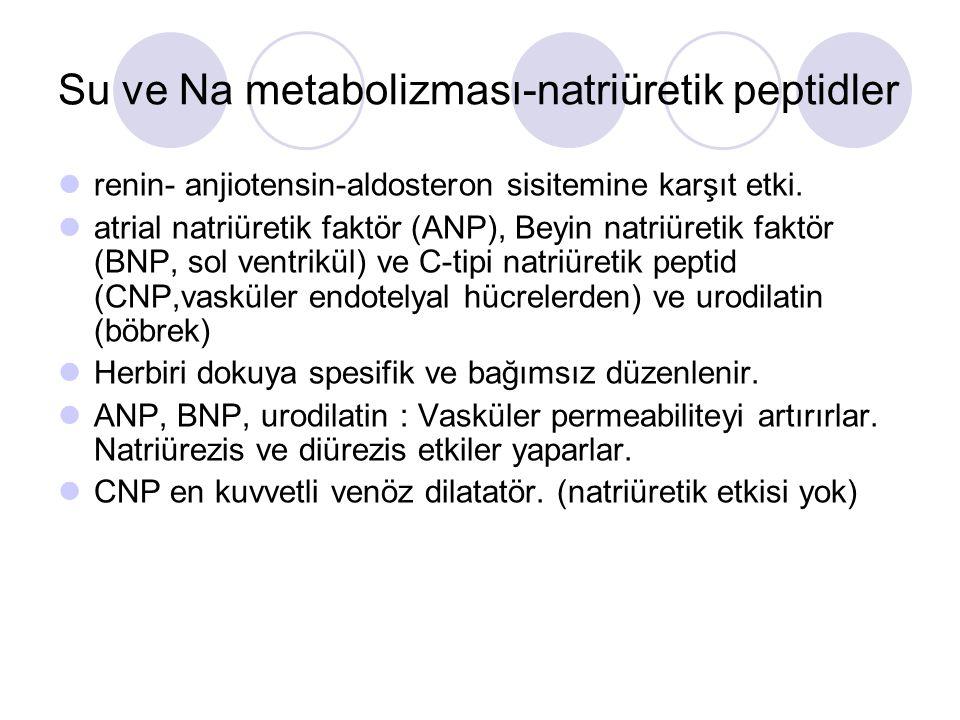 Su ve Na metabolizması-natriüretik peptidler renin- anjiotensin-aldosteron sisitemine karşıt etki. atrial natriüretik faktör (ANP), Beyin natriüretik