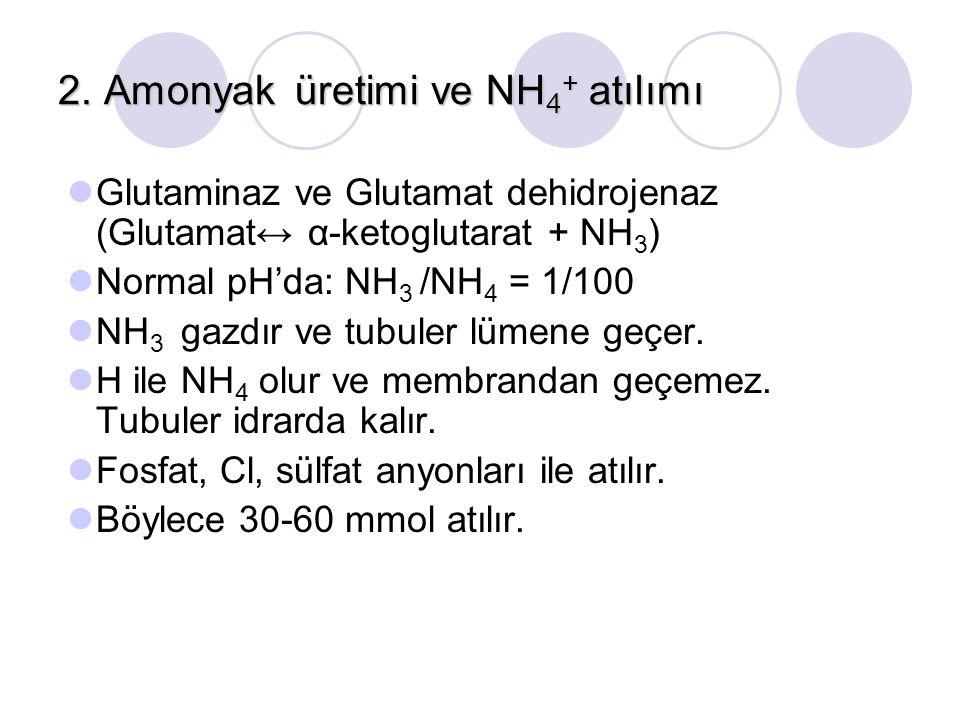 2. Amonyak üretimi ve NH 4 + atılımı Glutaminaz ve Glutamat dehidrojenaz (Glutamat↔ α-ketoglutarat + NH 3 ) Normal pH'da: NH 3 /NH 4 = 1/100 NH 3 gazd