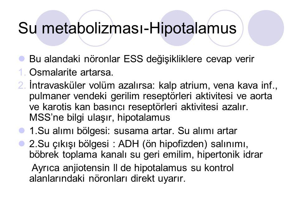 Su metabolizması-Hipotalamus Bu alandaki nöronlar ESS değişikliklere cevap verir 1.Osmalarite artarsa. 2.İntravasküler volüm azalırsa: kalp atrium, ve