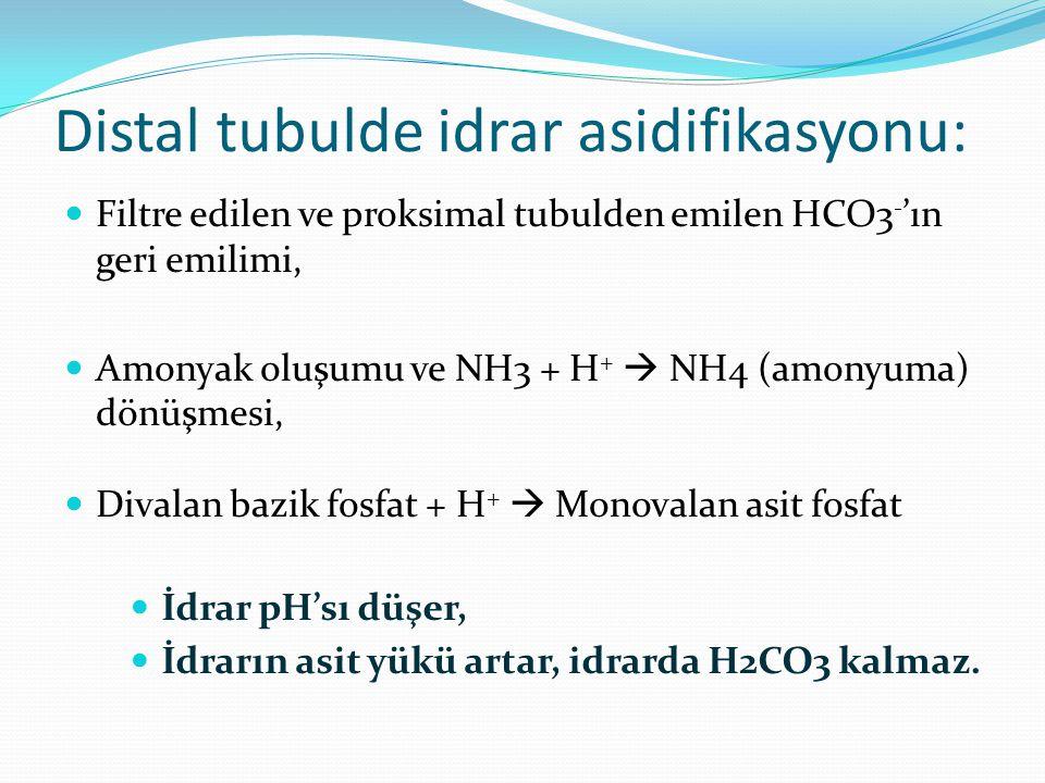 Distal tubulde idrar asidifikasyonu: Filtre edilen ve proksimal tubulden emilen HCO3 - 'ın geri emilimi, Amonyak oluşumu ve NH3 + H +  NH4 (amonyuma) dönüşmesi, Divalan bazik fosfat + H +  Monovalan asit fosfat İdrar pH'sı düşer, İdrarın asit yükü artar, idrarda H2CO3 kalmaz.