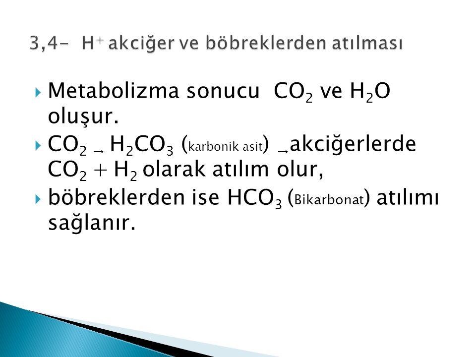  Metabolizma sonucu CO 2 ve H 2 O oluşur.