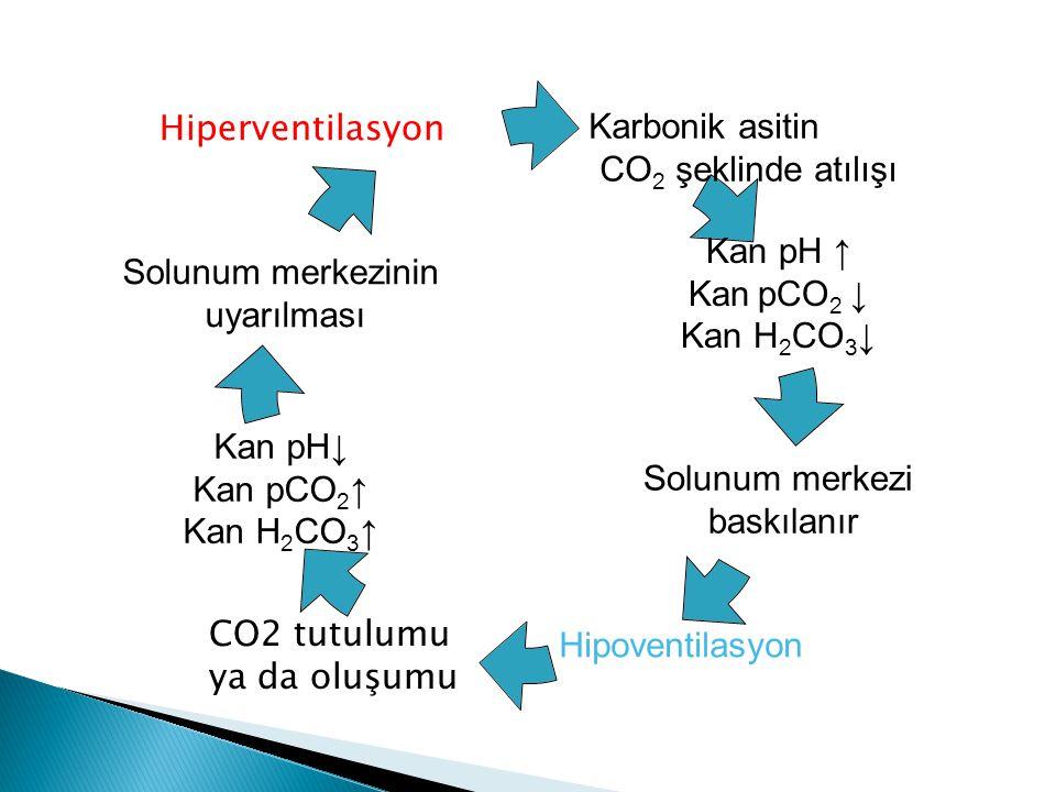 Karbonik asitin CO2 şeklinde atılışı Kan pH ↑ Kan pCO2 ↓ Kan H 2 CO 3 ↓ Solunum merkezi baskılanır Hipoventilasyon Kan pH↓ Kan pCO2↑ Kan H 2 CO 3 ↑ Solunum merkezinin uyarılması Hiperventilasyon CO2 tutulumu ya da oluşumu
