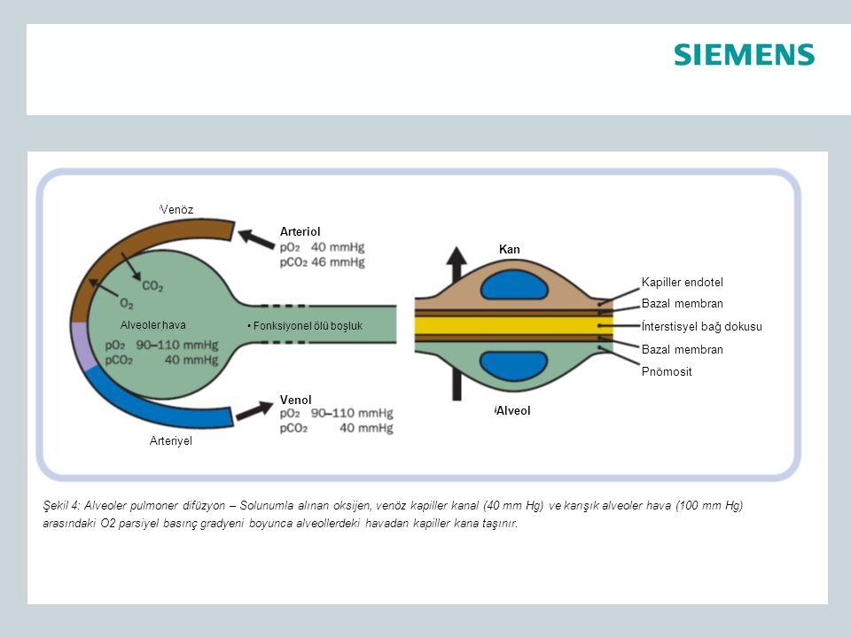 Kapiller endotel Bazal membran İnterstisyel bağ dokusu Bazal membran Pnömosit Kan Alveol Fonksiyonel ölü boşluk Venol Arteriol Alveoler hava Arteriyel