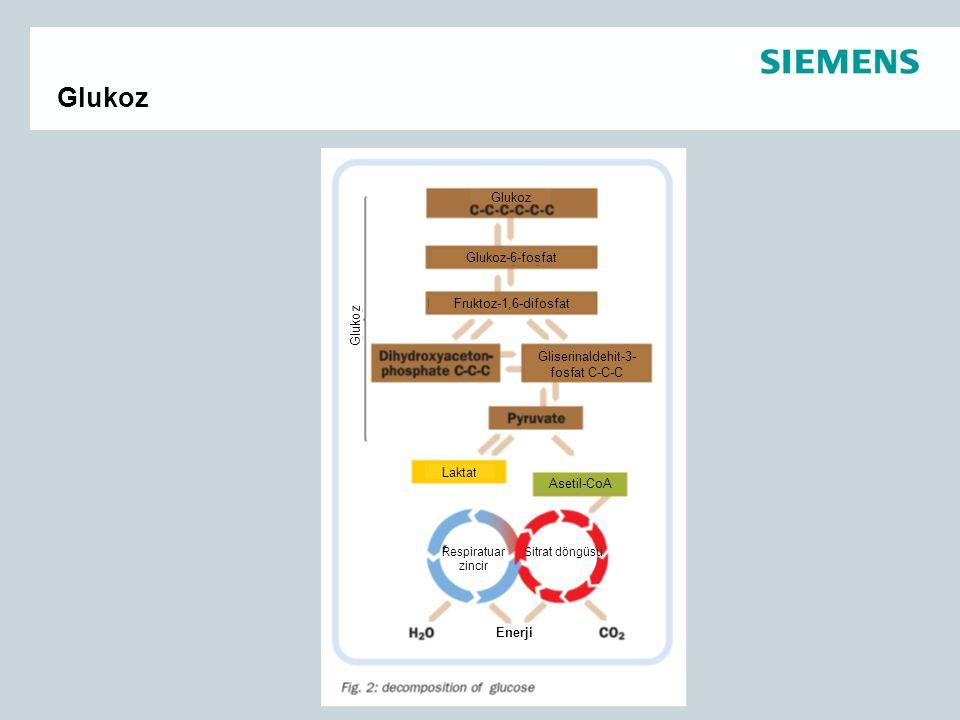 Glukoz Glukoz-6-fosfat Fruktoz-1,6-difosfat Glukoz Gliserinaldehit-3- fosfat C-C-C Laktat Asetil-CoA Respiratuar zincir Sitrat döngüsü Enerji