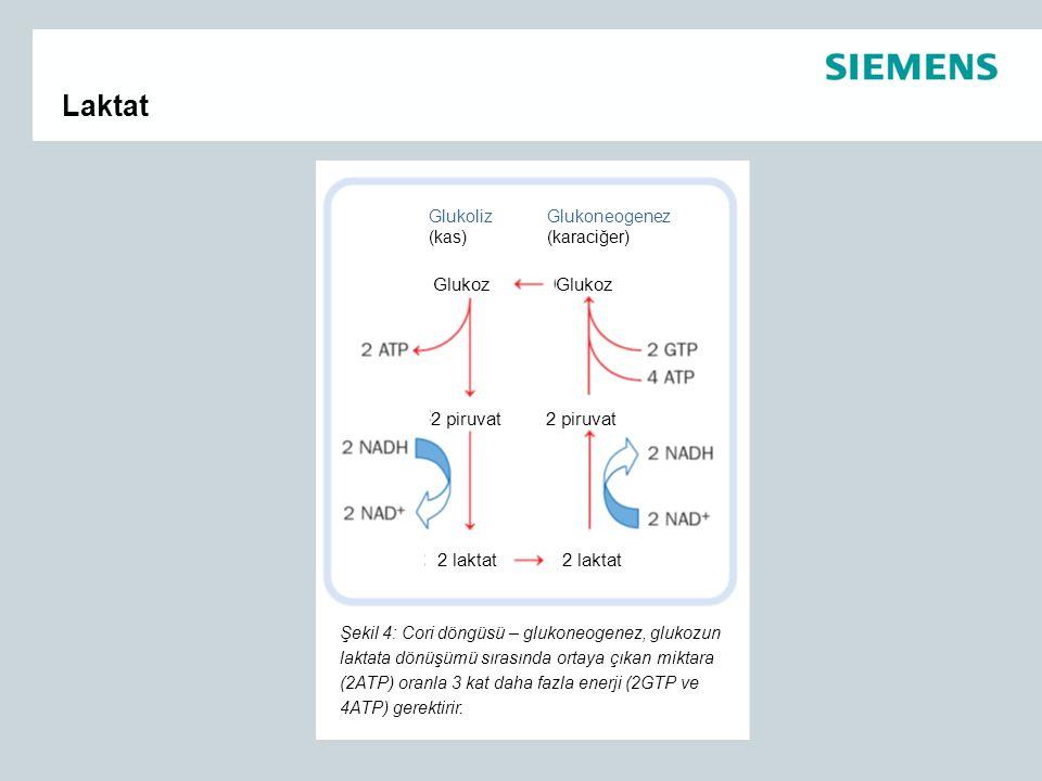 Laktat Glukoliz (kas) Glukoneogenez (karaciğer) Glukoz 2 piruvat 2 laktat Şekil 4: Cori döngüsü – glukoneogenez, glukozun laktata dönüşümü sırasında o