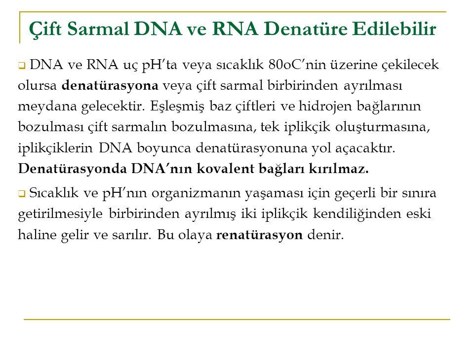  DNA ve RNA uç pH'ta veya sıcaklık 80oC'nin üzerine çekilecek olursa denatürasyona veya çift sarmal birbirinden ayrılması meydana gelecektir.