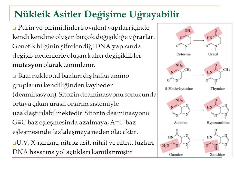  Pürin ve pirimidinler kovalent yapıları içinde kendi kendine oluşan birçok değişikliğe uğrarlar.