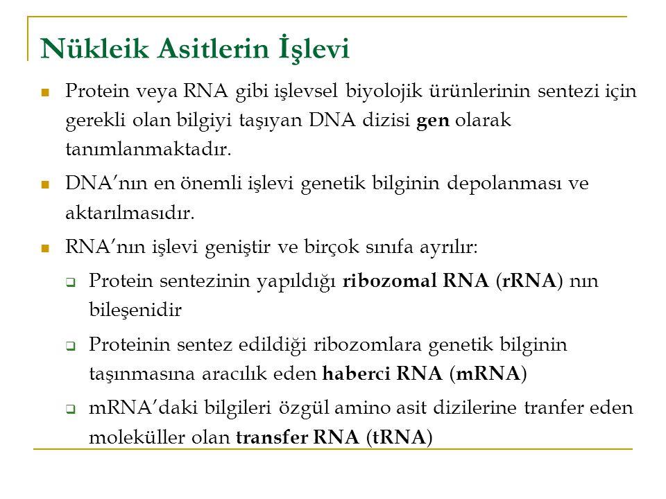 Nükleik Asitlerin İşlevi Protein veya RNA gibi işlevsel biyolojik ürünlerinin sentezi için gerekli olan bilgiyi taşıyan DNA dizisi gen olarak tanımlanmaktadır.