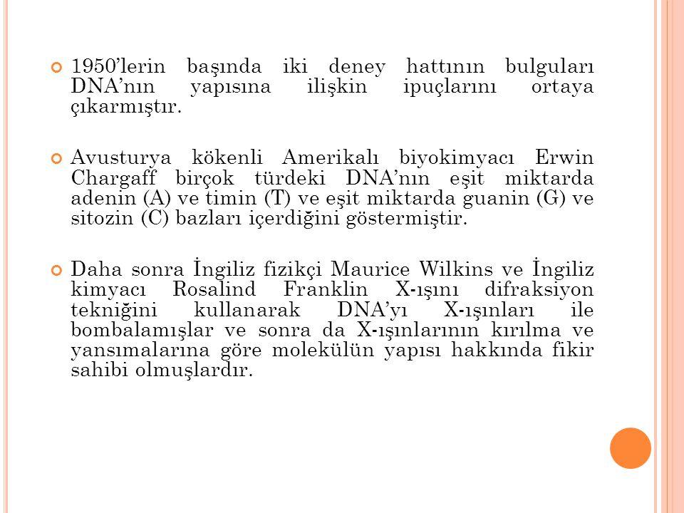 1950'lerin başında iki deney hattının bulguları DNA'nın yapısına ilişkin ipuçlarını ortaya çıkarmıştır. Avusturya kökenli Amerikalı biyokimyacı Erwin