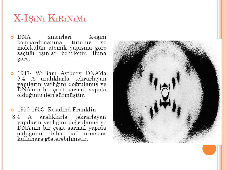 X-I ŞıNı K ıRıNıMı DNA zincirleri X-ışını bombardımanına tutulur ve molekülün atomik yapısına göre saçtığı ışınlar belirlenir. Buna göre; 1947- Willia