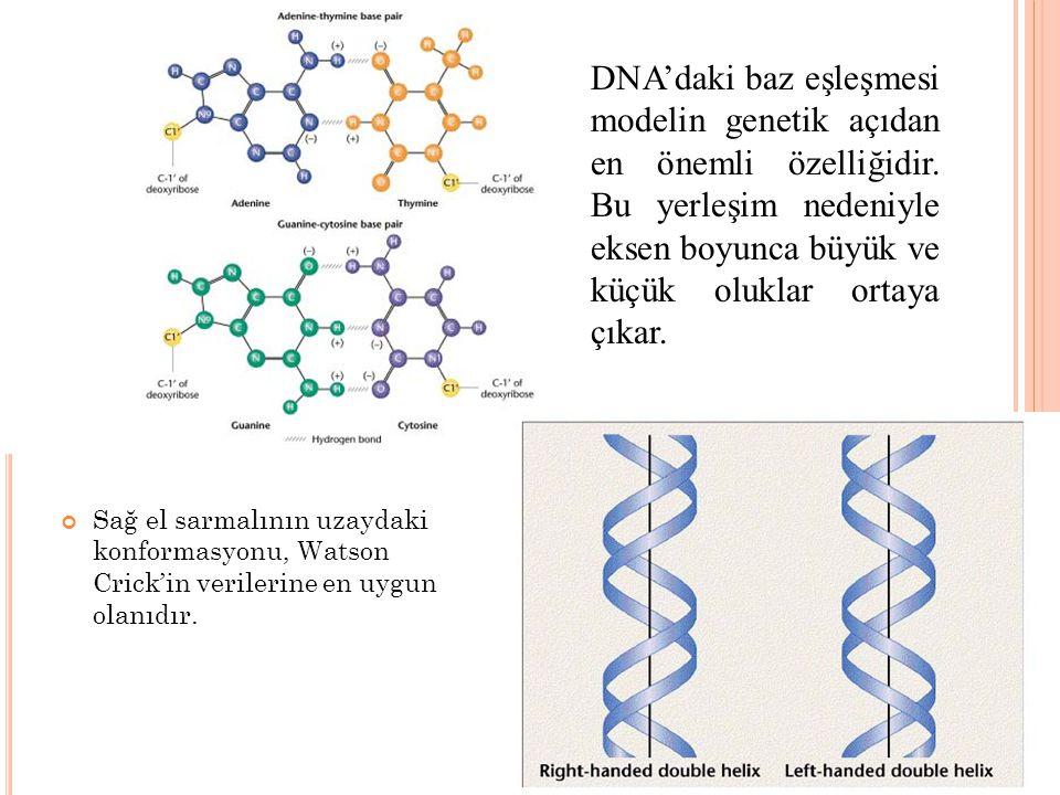 DNA'daki baz eşleşmesi modelin genetik açıdan en önemli özelliğidir. Bu yerleşim nedeniyle eksen boyunca büyük ve küçük oluklar ortaya çıkar. Sağ el s