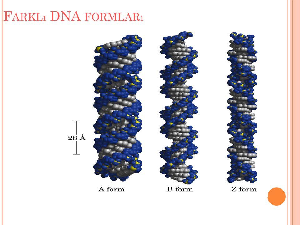 F ARKLı DNA FORMLARı