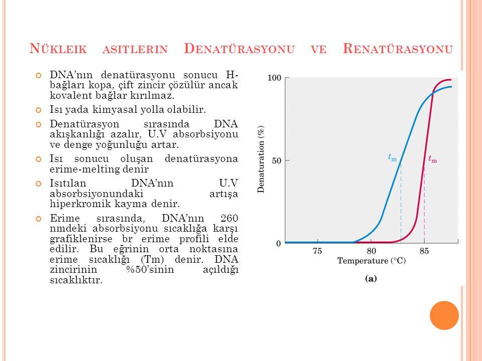 N ÜKLEIK ASITLERIN D ENATÜRASYONU VE R ENATÜRASYONU DNA'nın denatürasyonu sonucu H- bağları kopa, çift zincir çözülür ancak kovalent bağlar kırılmaz.