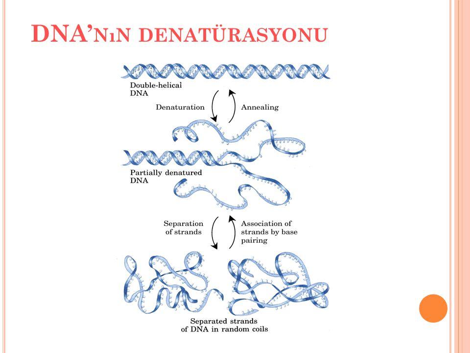 DNA' NıN DENATÜRASYONU