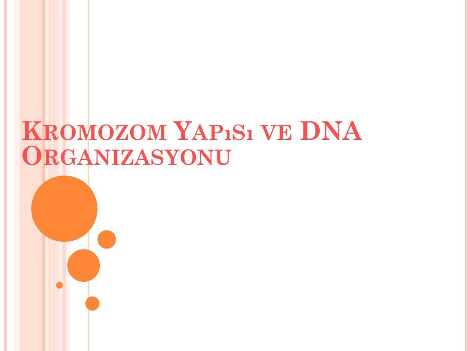 K ROMOZOM Y APıSı VE DNA O RGANIZASYONU