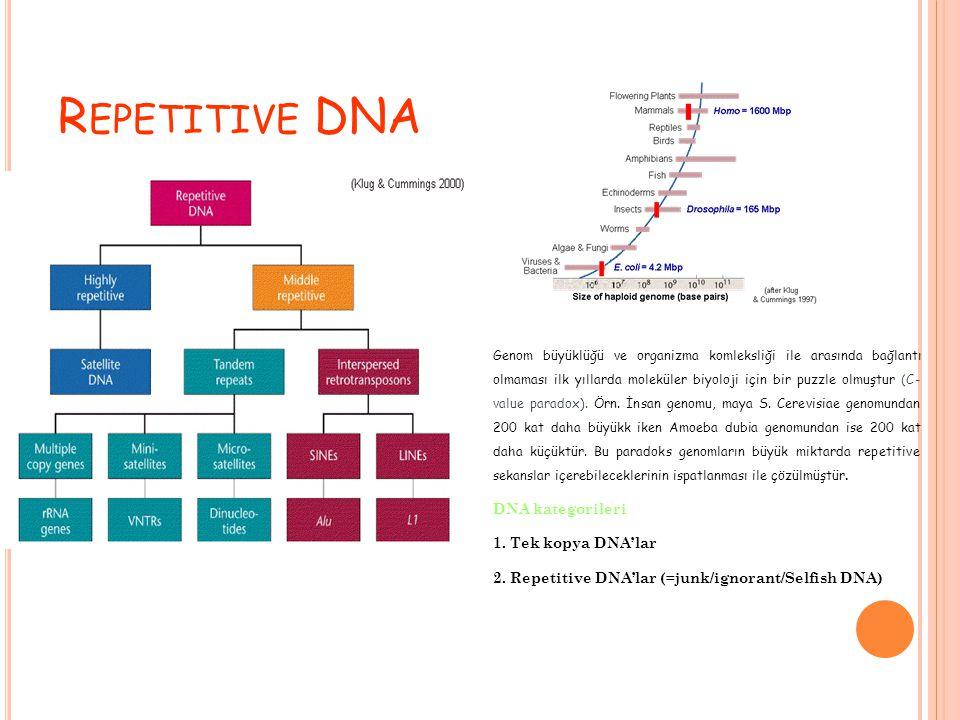 R EPETITIVE DNA Genom büyüklüğü ve organizma komleksliği ile arasında bağlantı olmaması ilk yıllarda moleküler biyoloji için bir puzzle olmuştur (C- value paradox).