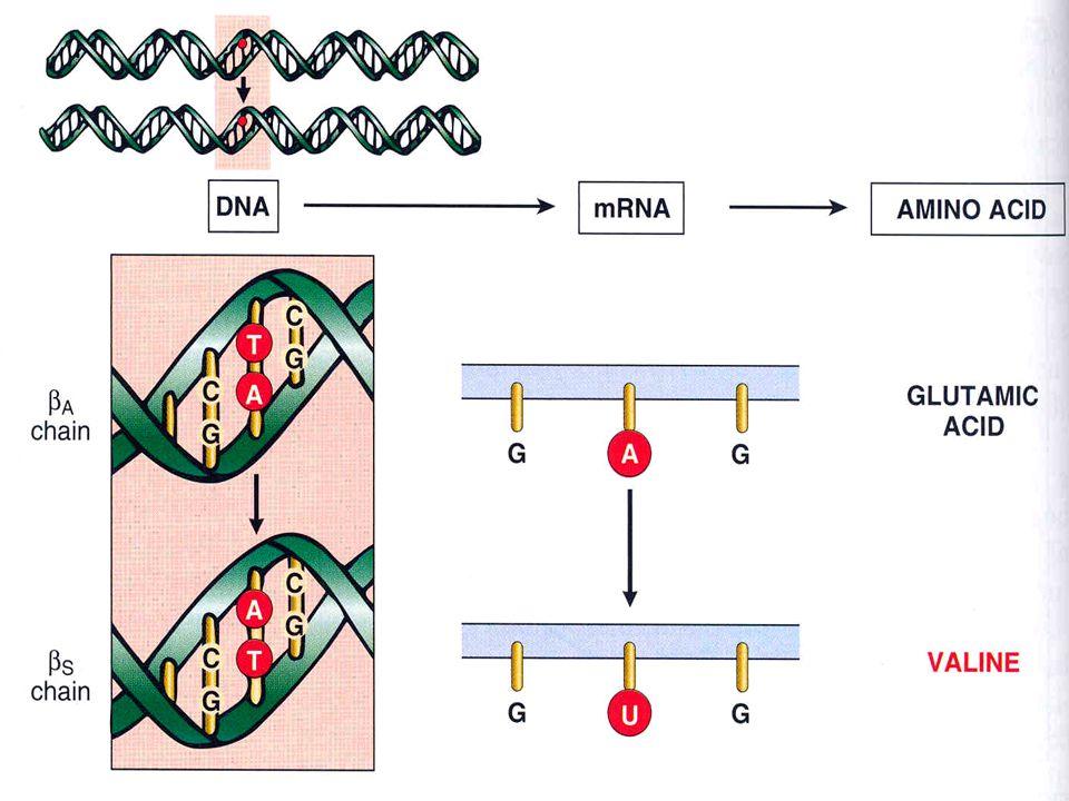 Tek baz etkilenirse, nokta mutasyonu oluşur.Bunun sonucunda farklı bir aminoasit ortaya çıkar.