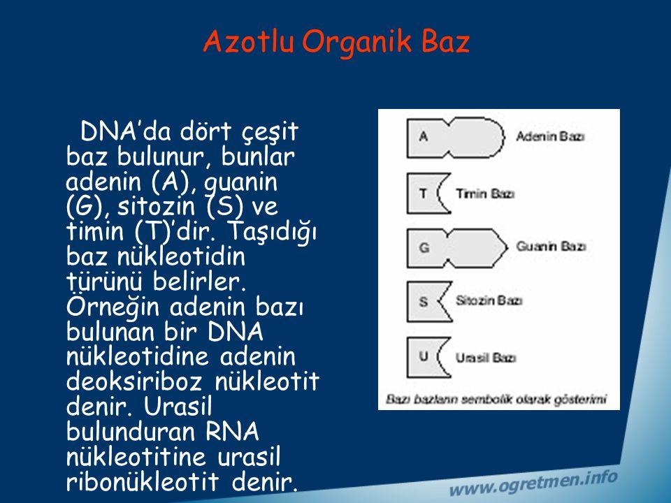 DNA Molekülünün Yapısı Nasıldır? DNA molekülünün yapısında karbon (C), oksijen (O), hidrojen (H), azot (N) ve fosfat (P) elementleri bulunur.Bir nükle