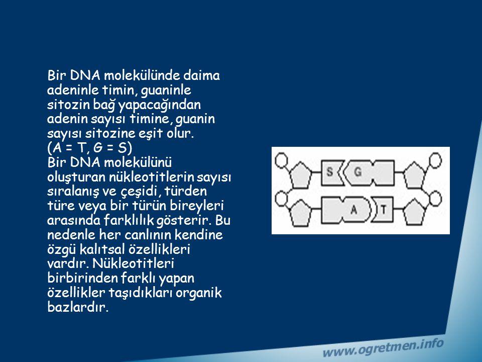 Fosfat Fosforik asittir. Hem DNA hem de RNA'da bulunur. Baz, şeker ve fosfatın birleşmesiyle oluşan yapıya nükleotit denir. DNA'da 4 çeşit nükleotid b