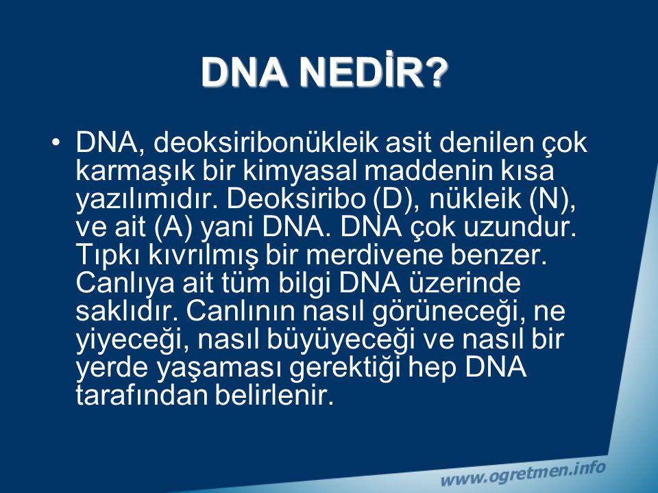 DNA (Deoksiribo Nükleik Asit)