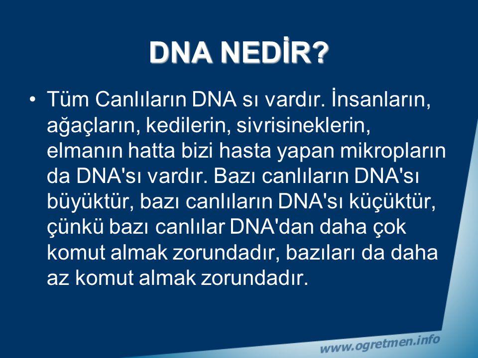 DNA, deoksiribonükleik asit denilen çok karmaşık bir kimyasal maddenin kısa yazılımıdır. Deoksiribo (D), nükleik (N), ve ait (A) yani DNA. DNA çok uzu