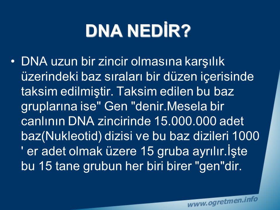 DNA her hücrede bulunur.Böbreklerinizin hücrelerinde, karaciğerinizin hücrelerinde, kemik hücrelerinizde kısacası vücudunuzdaki her hücrede DNA molekü