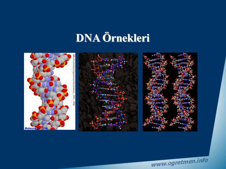 İnsan hücresinde ise yaklaşık olarak 3 milyar adet gen bulunur.Tabi her genin içinde binlerce nükleotid dizisi vardır. Bir canlının bütün karakterleri