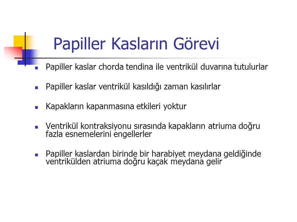 Papiller Kasların Görevi Papiller kaslar chorda tendina ile ventrikül duvarına tutulurlar Papiller kaslar ventrikül kasıldığı zaman kasılırlar Kapakla