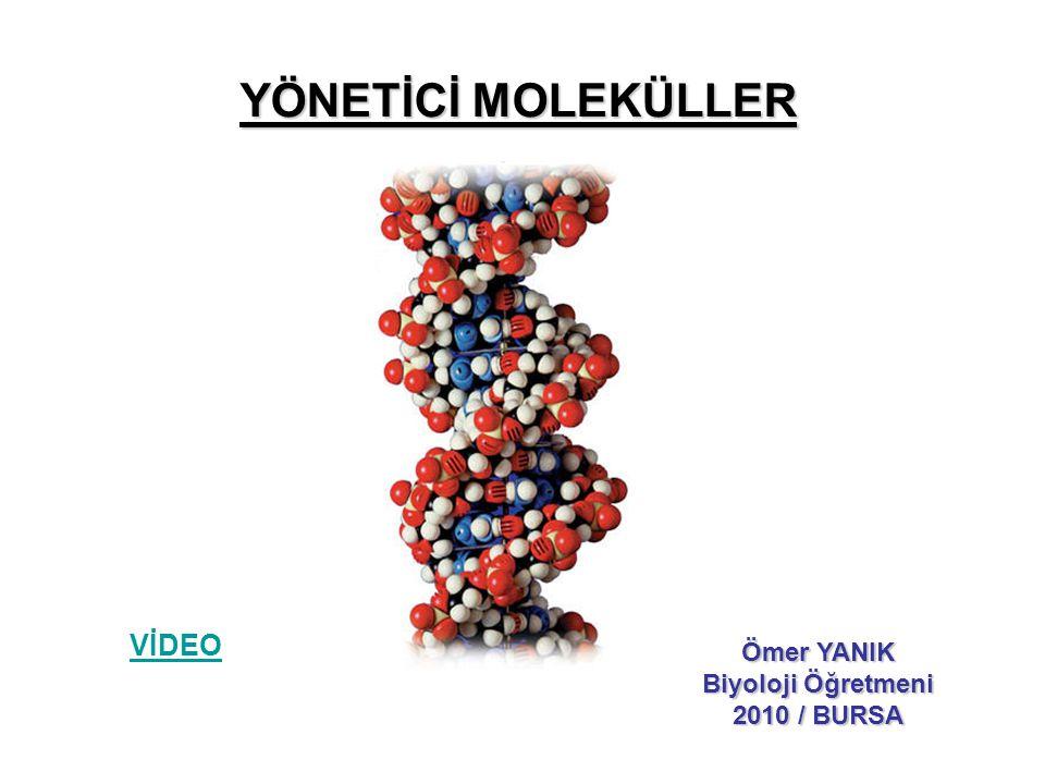YÖNETİCİ MOLEKÜLLER Ömer YANIK Biyoloji Öğretmeni 2010 / BURSA VİDEO
