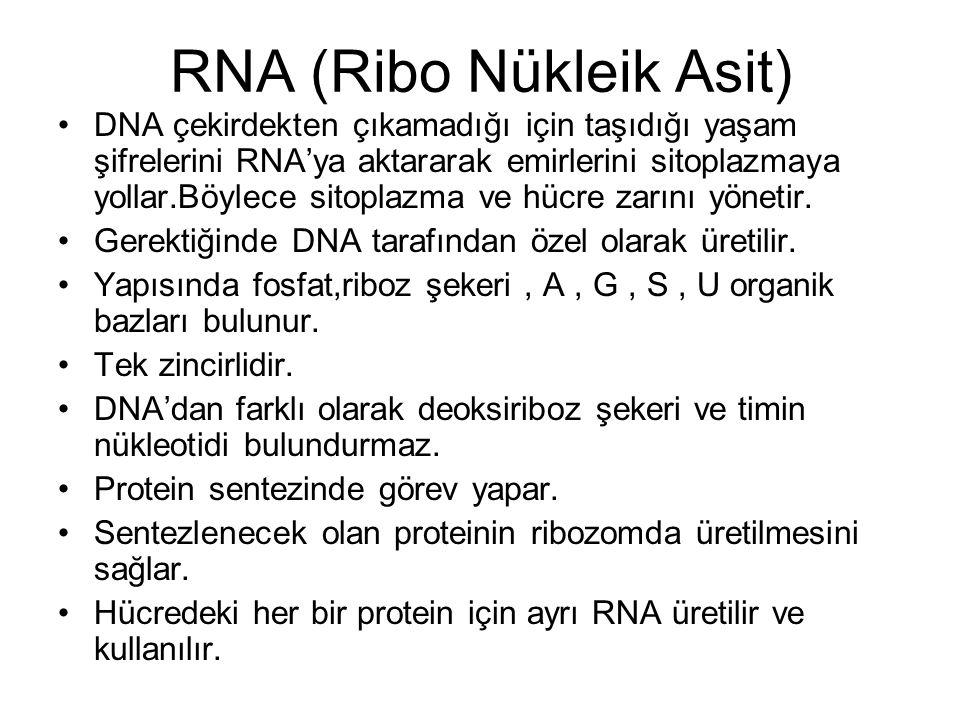 RNA (Ribo Nükleik Asit) DNA çekirdekten çıkamadığı için taşıdığı yaşam şifrelerini RNA'ya aktararak emirlerini sitoplazmaya yollar.Böylece sitoplazma