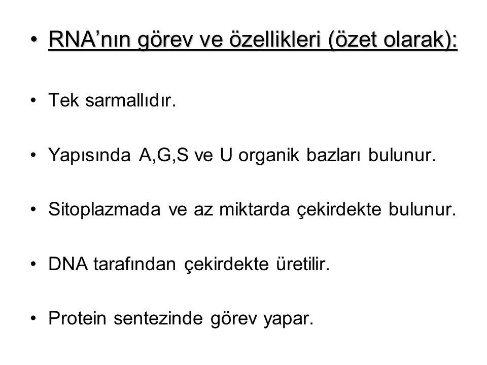 RNA'nın görev ve özellikleri (özet olarak): Tek sarmallıdır. Yapısında A,G,S ve U organik bazları bulunur. Sitoplazmada ve az miktarda çekirdekte bulu