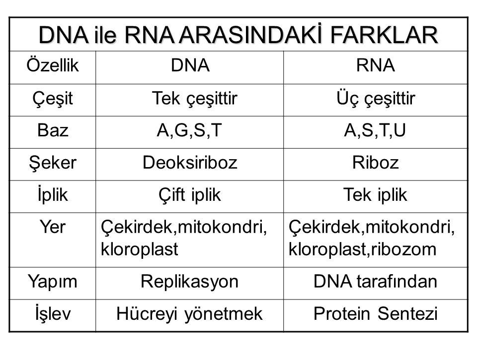 DNA ile RNA ARASINDAKİ FARKLAR ÖzellikDNARNA Çeşit Tek çeşittirÜç çeşittir BazA,G,S,TA,S,T,U ŞekerDeoksiribozRiboz İplikÇift iplikTek iplik YerÇekirde