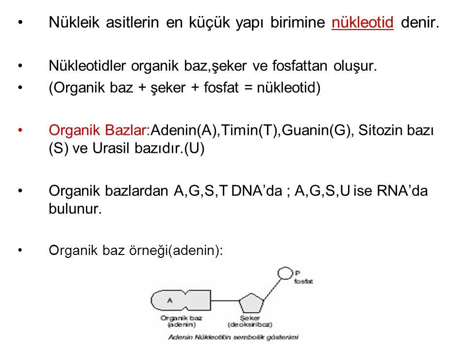 Nükleik asitlerin en küçük yapı birimine nükleotid denir. Nükleotidler organik baz,şeker ve fosfattan oluşur. (Organik baz + şeker + fosfat = nükleoti