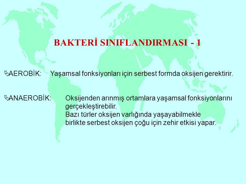 BAKTERİ SINIFLANDIRMASI - 2  Spor Üreten  Sporsuz