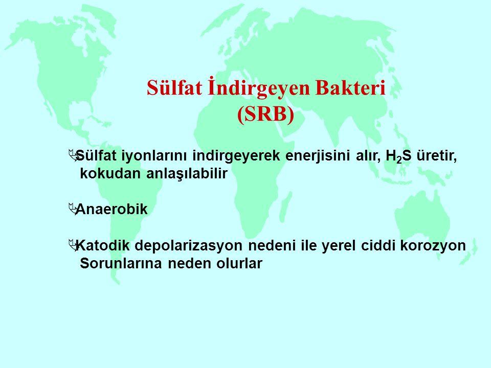 Sülfat İndirgeyen Bakteri (SRB)  Sülfat iyonlarını indirgeyerek enerjisini alır, H 2 S üretir, kokudan anlaşılabilir  Anaerobik  Katodik depolariza