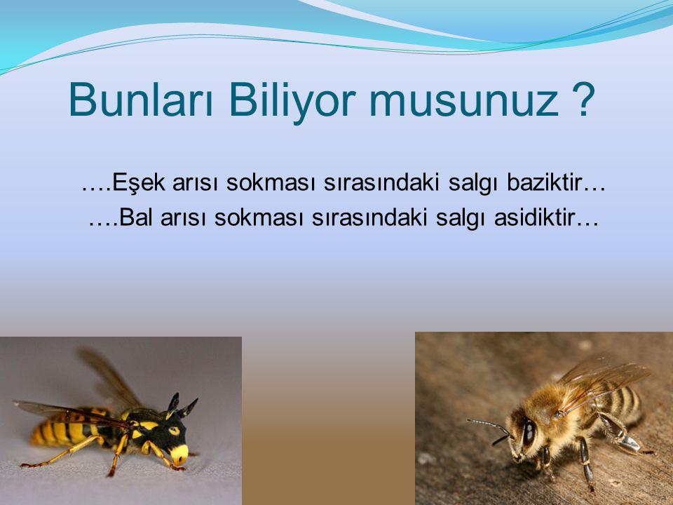 Bunları Biliyor musunuz ? ….Eşek arısı sokması sırasındaki salgı baziktir… ….Bal arısı sokması sırasındaki salgı asidiktir…