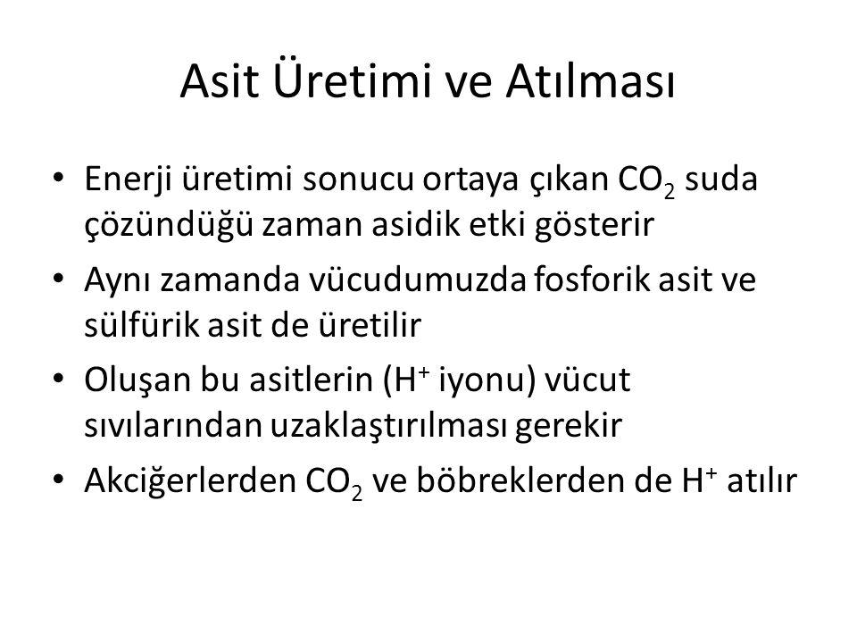 Asit Üretimi ve Atılması Enerji üretimi sonucu ortaya çıkan CO 2 suda çözündüğü zaman asidik etki gösterir Aynı zamanda vücudumuzda fosforik asit ve s