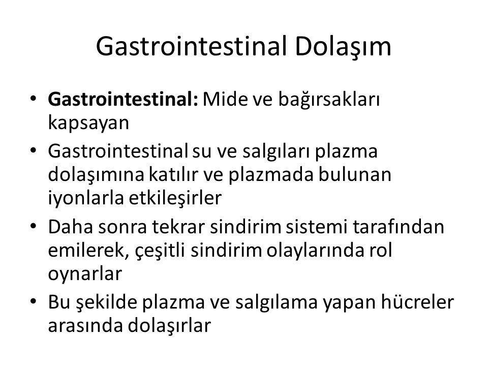 Gastrointestinal Dolaşım Gastrointestinal: Mide ve bağırsakları kapsayan Gastrointestinal su ve salgıları plazma dolaşımına katılır ve plazmada buluna