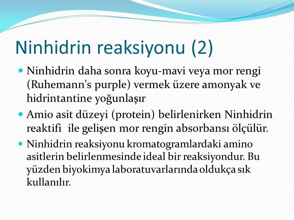 Ninhidrin reaksiyonu (2) Ninhidrin daha sonra koyu-mavi veya mor rengi (Ruhemann's purple) vermek üzere amonyak ve hidrintantine yoğunlaşır Amio asit