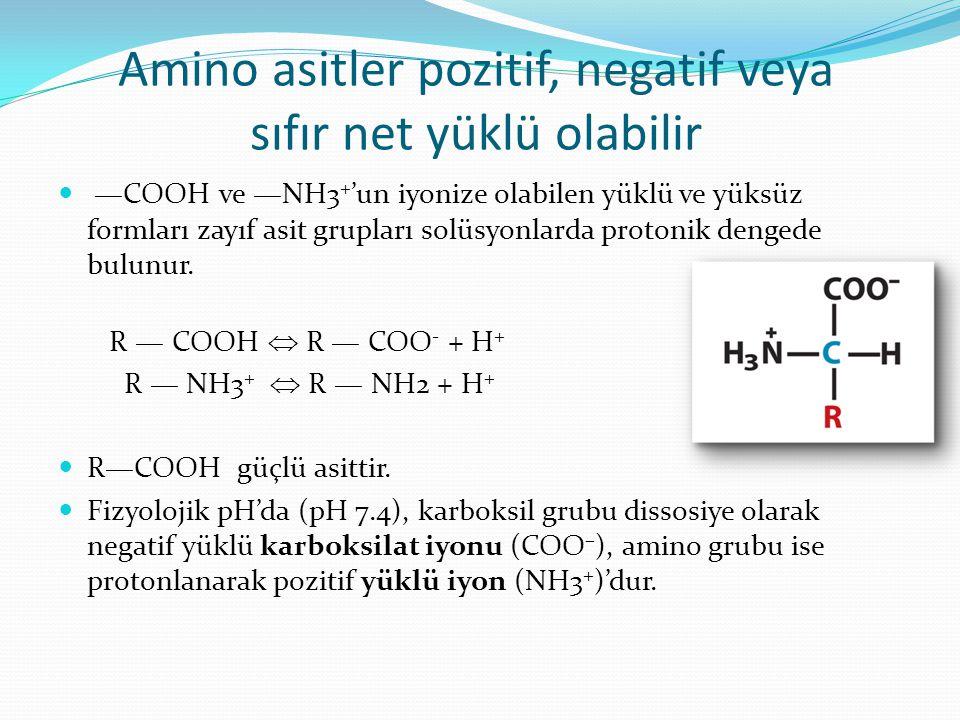 Amino asitler pozitif, negatif veya sıfır net yüklü olabilir —COOH ve —NH3 + 'un iyonize olabilen yüklü ve yüksüz formları zayıf asit grupları solüsyo