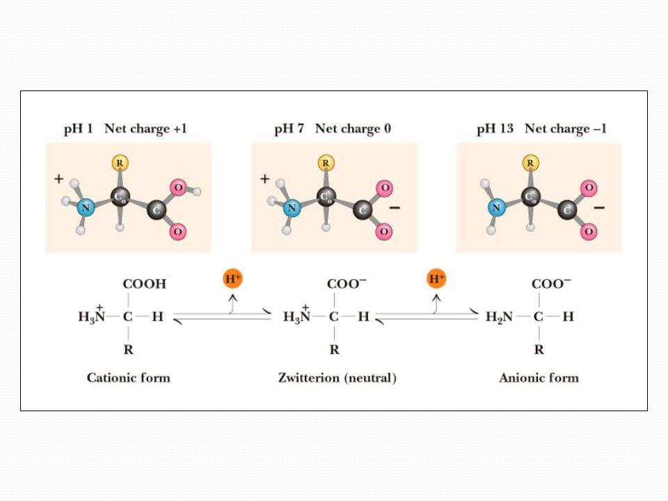 Izoelektrik nokta (pI) İzoelektrik nokta (isoelectric point) (pI) bir amino asitin elektrik alanında göç etmediği pH'dır.