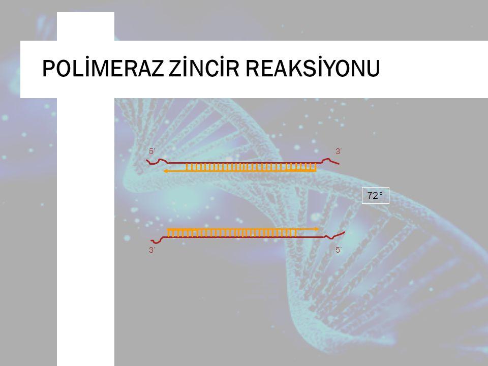 5'3' 5' 72° POLİMERAZ ZİNCİR REAKSİYONU