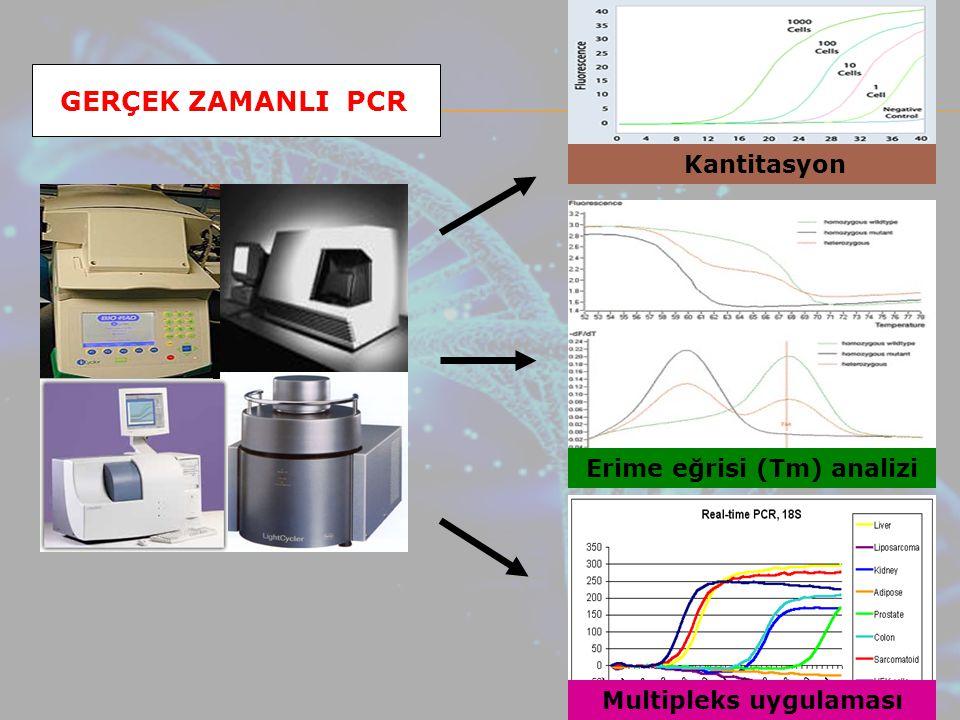 GERÇEK ZAMANLI PCR Kantitasyon Erime eğrisi (Tm) analizi Multipleks uygulaması