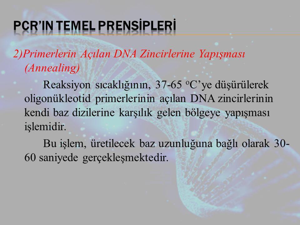 3) Primer Uzaması (Primer Extesion) DNA zincirleri üzerine yapışan primerlerin DNA polimeraz enzimi (Taq DNA polymerase) vasıtasıyla uzatılmasıdır.
